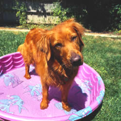 Make Your Own Dog Pool
