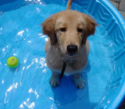 Every Dog In The Pool For Fitness