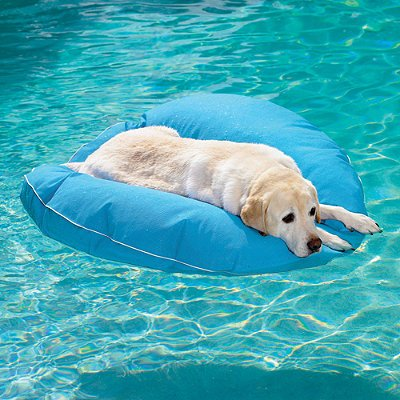 Raft for Swimming Dog