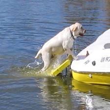 Buy the Dog Boat Ladder